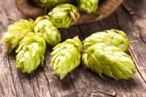 Image Les ingrédients de la bière